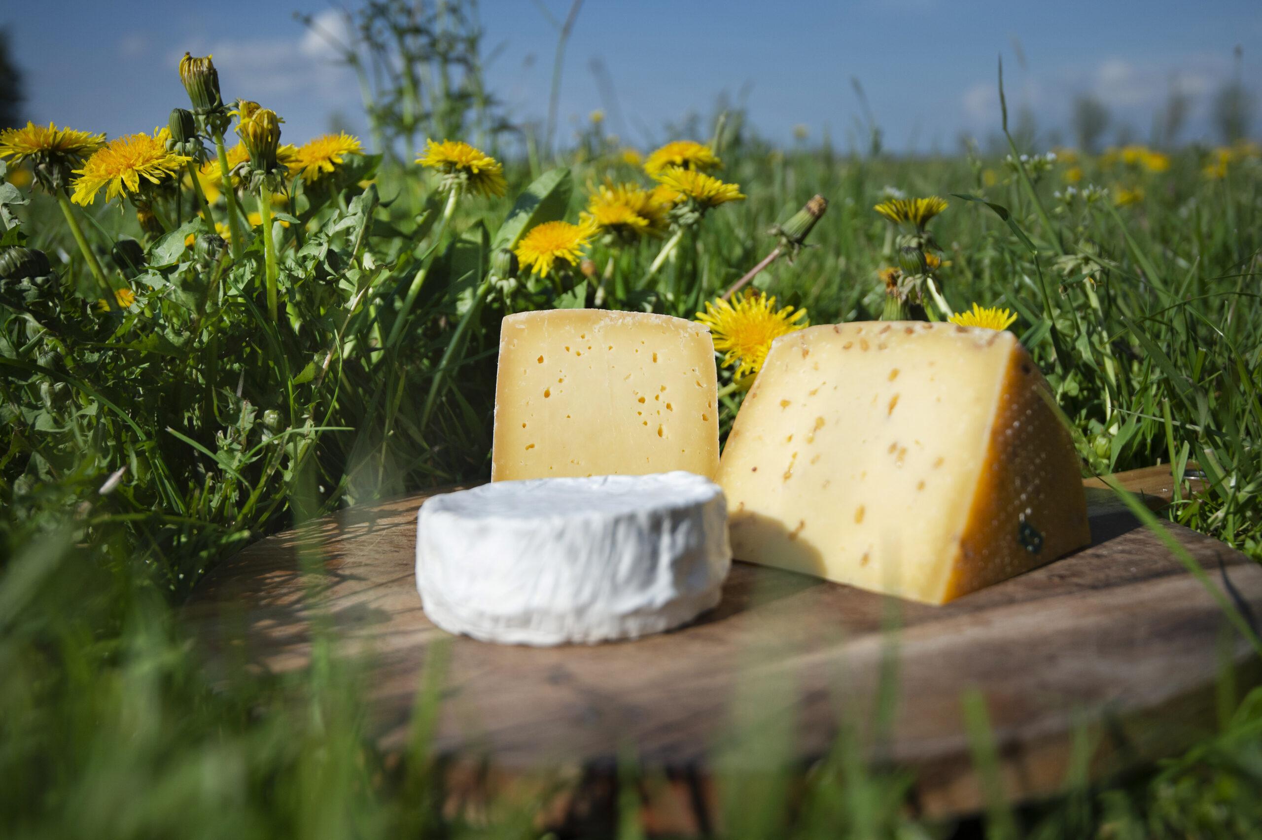 Grasgevoerde rauwmelkse kaas