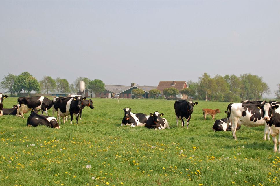 Graasboerderij